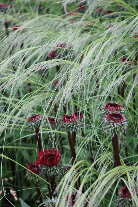 1000 images about plant combinations on pinterest for Spiky ornamental grass