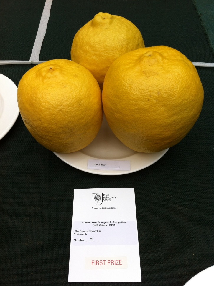 Duke of Devonshire's Citrus 'Lipo', Oct 2012