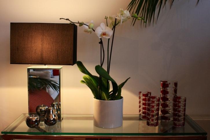 Phalaenopsis on glass console, Jan 2013