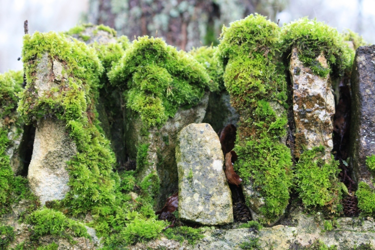 A moss-covered wall in Bibury, February 2013, was probably the greenest, brightest thing in town