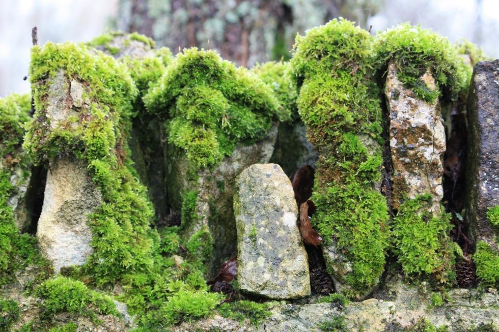 Bibury moss, Feb 2013