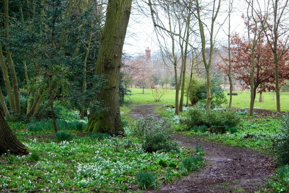 Path to the Golden Arboretum, Goodnestone Park
