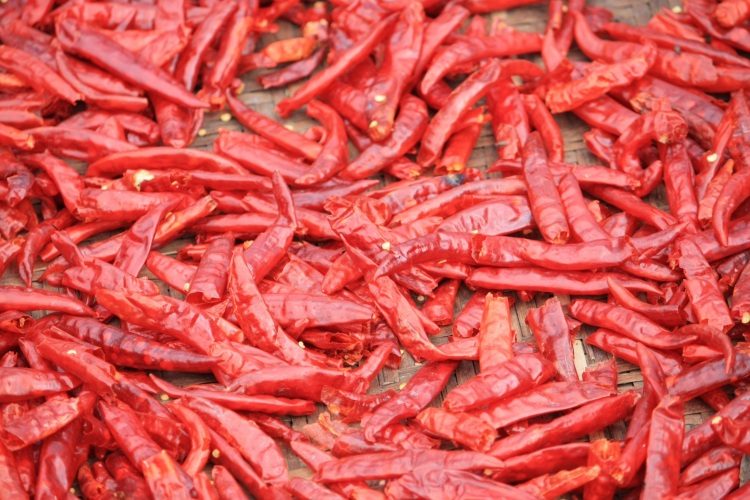 Chillies drying, Bumthang, Bhutan, April 2013