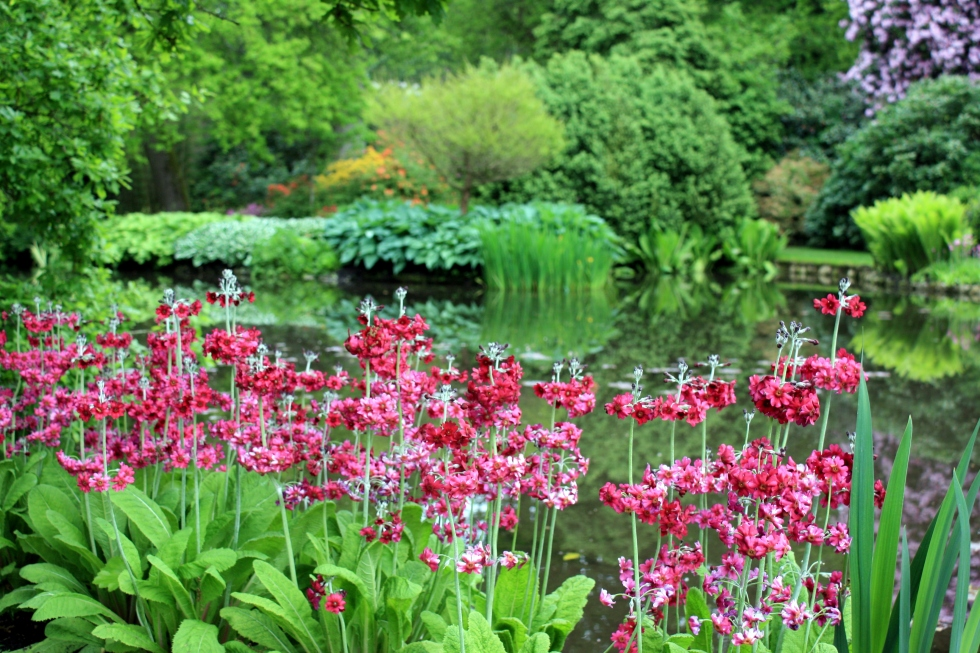 Candelabra primulas, Longstock Park Water Gardens, May 2013