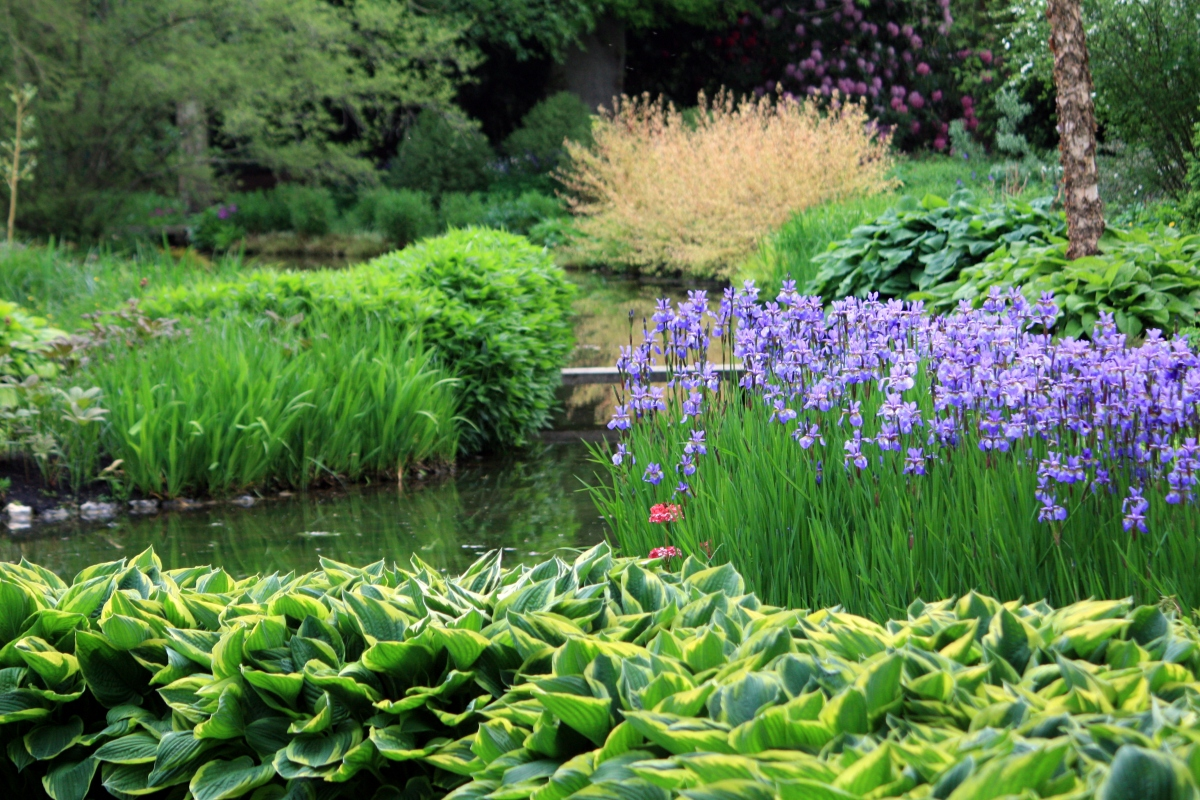 Longstock park water garden hampshire the frustrated gardener for How to water a garden