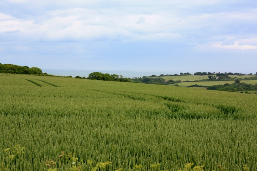 View of the English Channel from Windy Ridge gardens, Kent