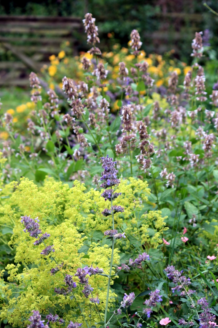 Summer flowers, Stonebridge Farm, July 2013
