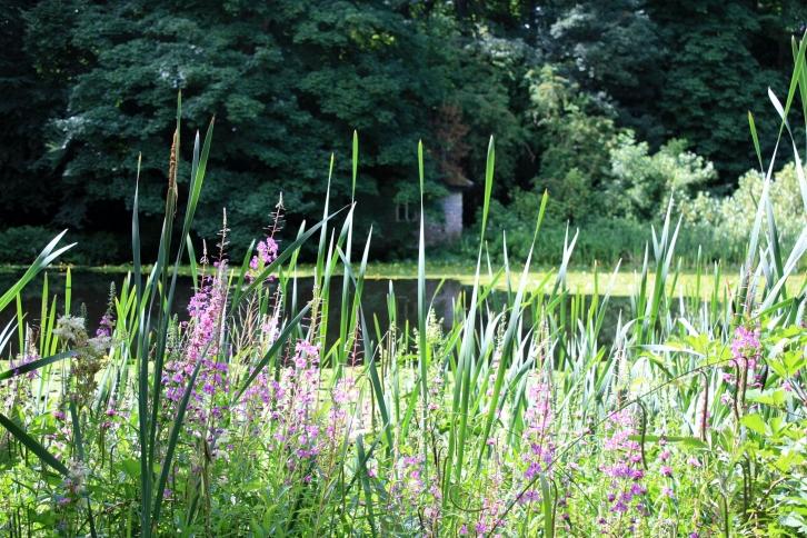 The China Pond, Wallington, July 2013