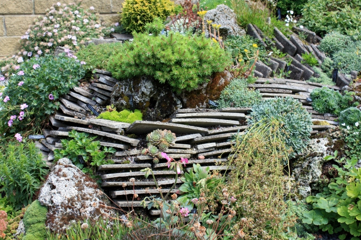 Alpine rock feature, RHS Harlow Carr, July 2013