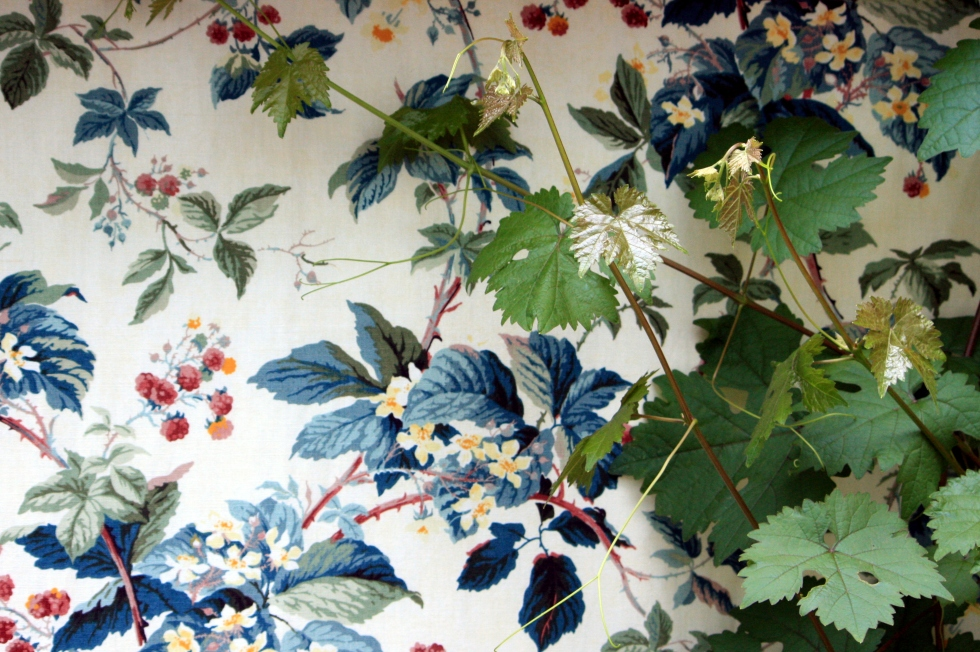 Vines scramble over a vintage Colefax and Fowler fabric in the greenhouse, Trevoole Farm, August 2013