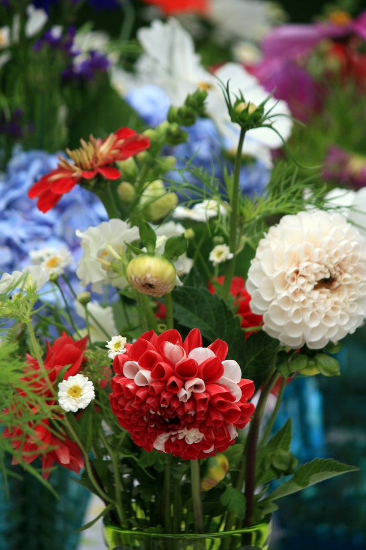 Dahlias, feverfew and zinnias, Trevoole Farm, Aug 2013
