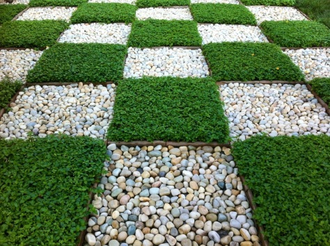 Checkerboard groundcover,  The Trident, Gurgaon, India
