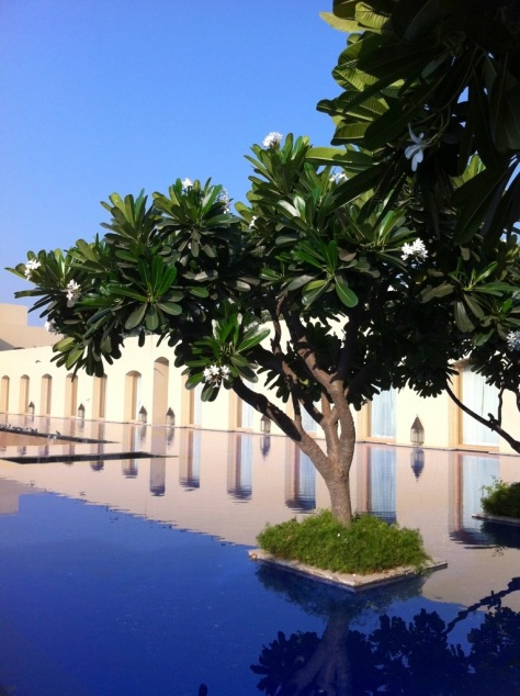 Frangipani tree and infinity pool, The Trident Hotel, Gurgaon, India