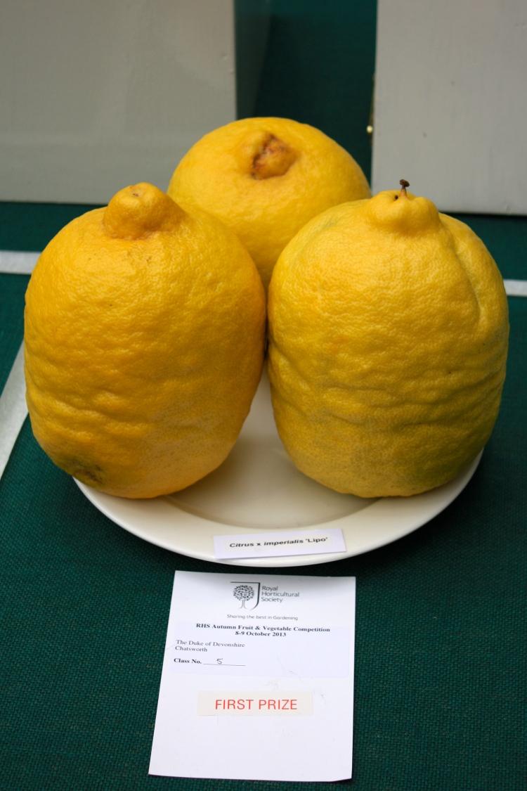 Citrus x imperialis 'Lipo', RHS London Harvest Festival Show 2013