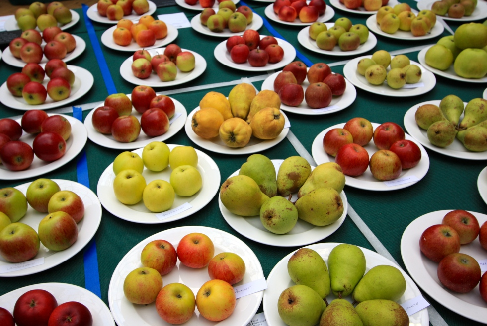 Apples and Pears, RHS London Harvest Festival Show 2013