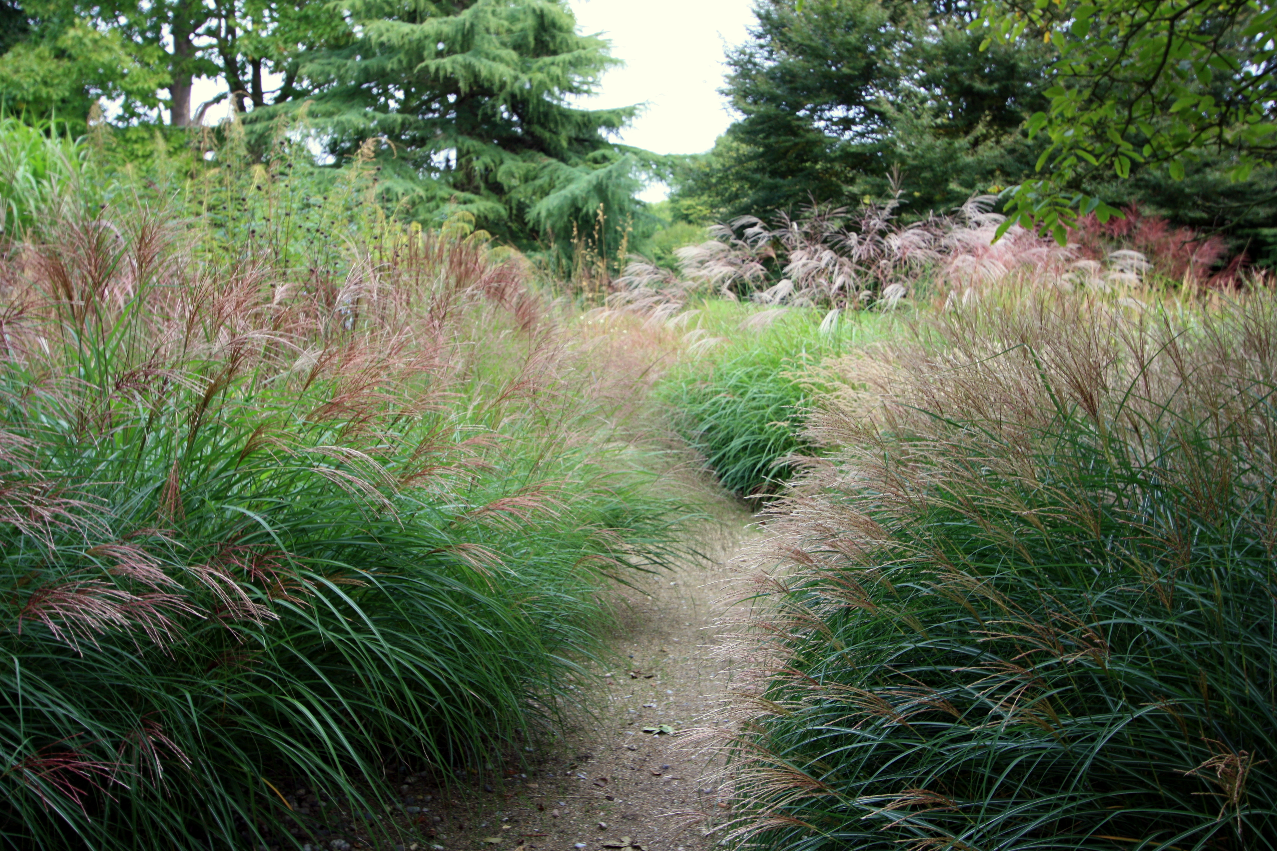 Glorious goodnestone part ii graceful grasses the for Wild grass gardens