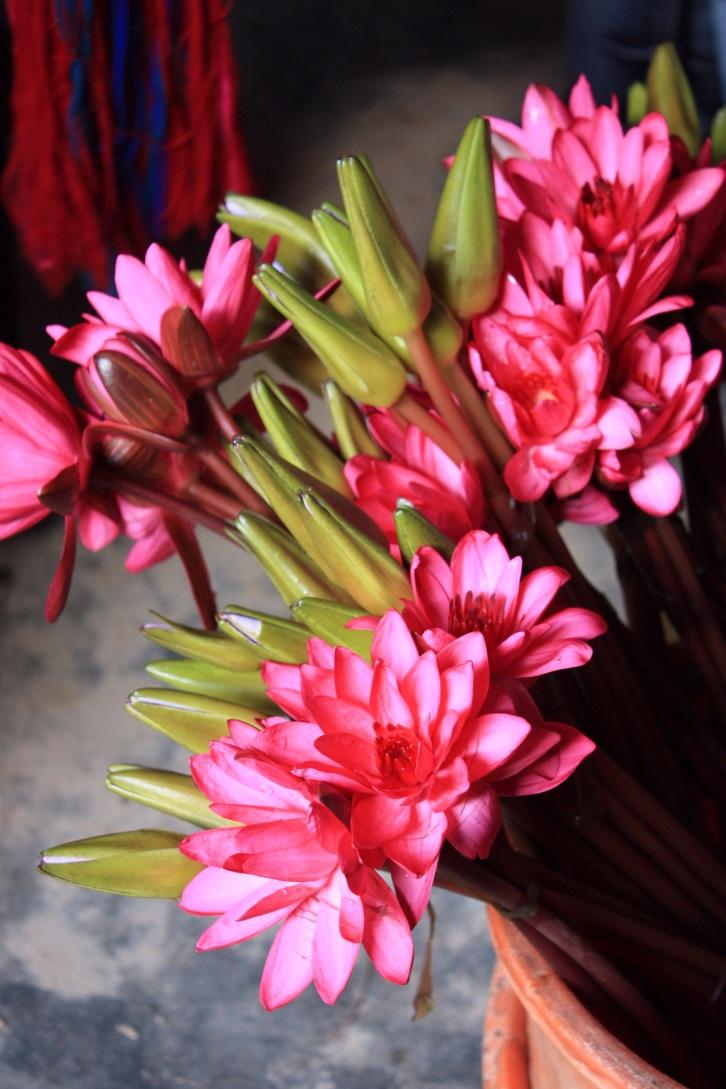 Waterlilies for offerings, Inle Lake, Burma, October 2012