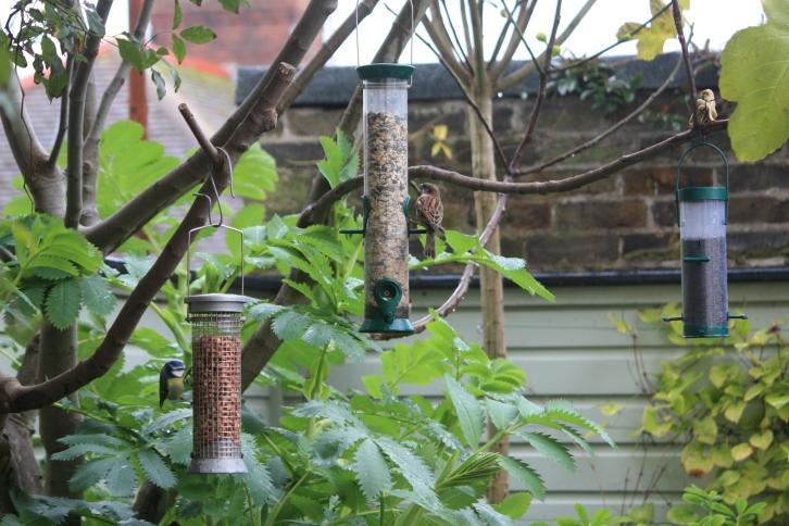 Bird feeders, November 2013