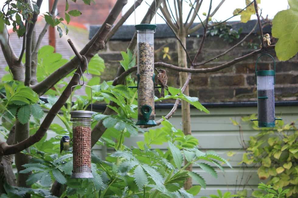 Bird feeders, November 2013