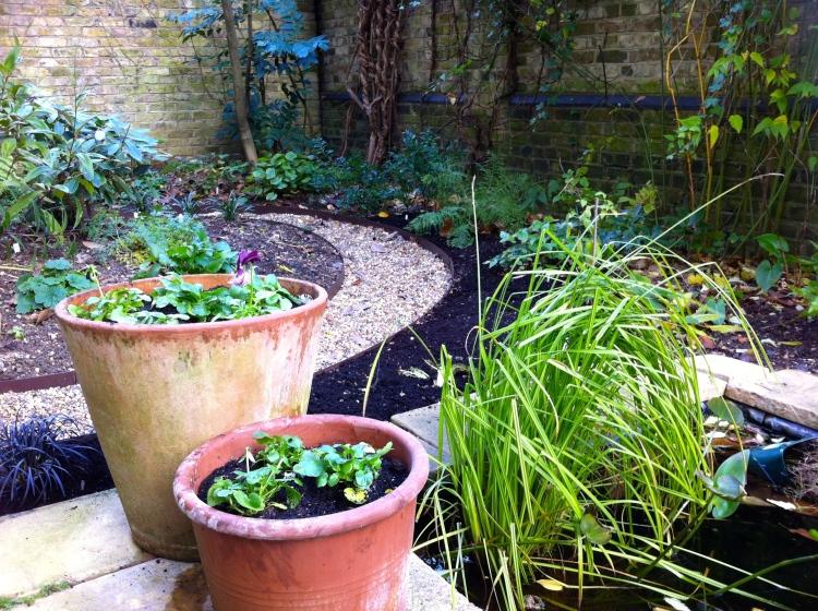 Our London Garden, 30th November 2013