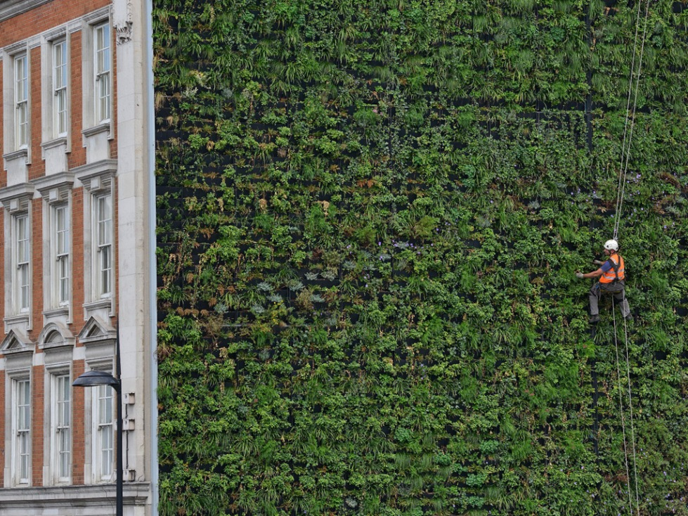 The Living Wall, Reubens Hotel. London