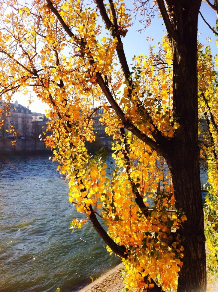 Poplar tree, The Louvre, Paris, December 2013