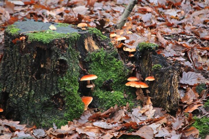 Fungi, Hampstead Heath, Boxing Day 2013