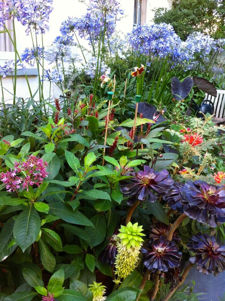 The Watch House Garden, September 2013