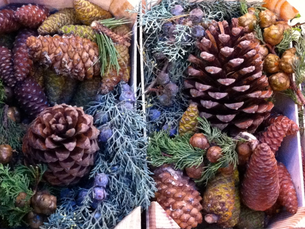 Pine cones, Holland, December 2013