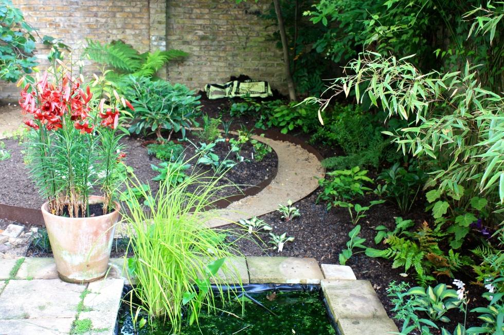 Our London Garden, August 2013