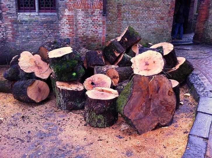 Fallen tree, Bruges, Belgium, Feb 2014