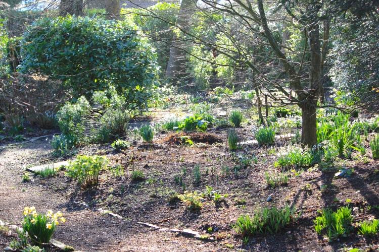 Bosvigo Woodland Garden, Feb 2014