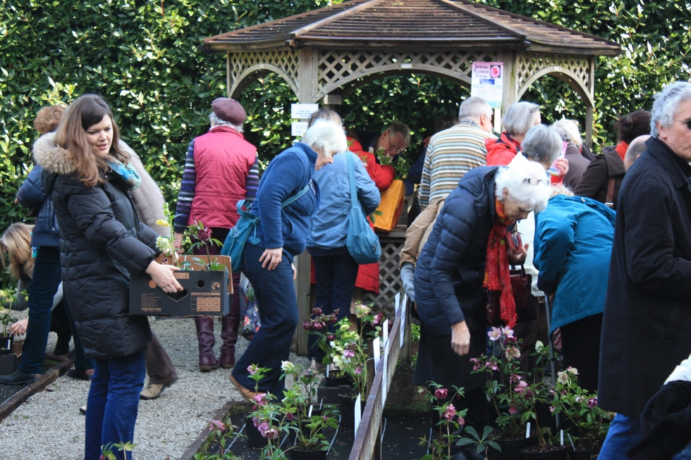 Shoppers at Bosvigo Hellebore Day 2013