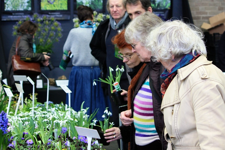Shoppers browse at the RHS London Plant and Design Show 2014