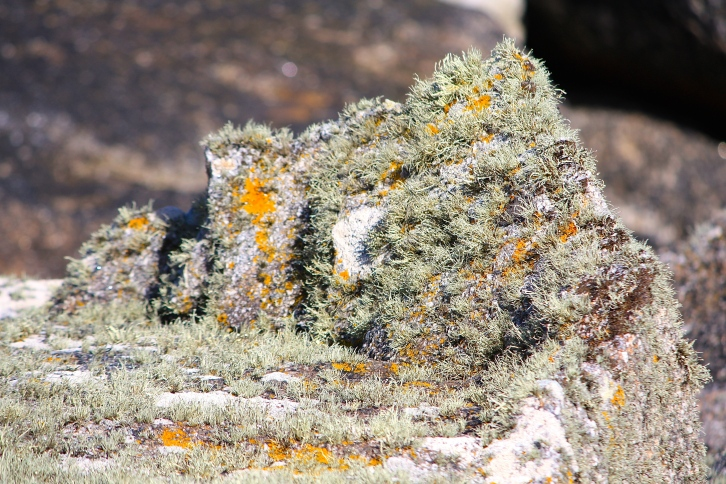 Lichens, North End, Tresco, April 2014