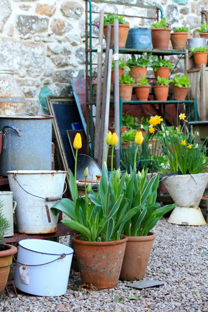 Tulips and gardenalia, Trevoole, April 2014
