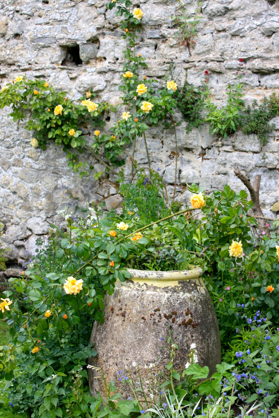 Urn and roses, Saltwood Castle, May 2014