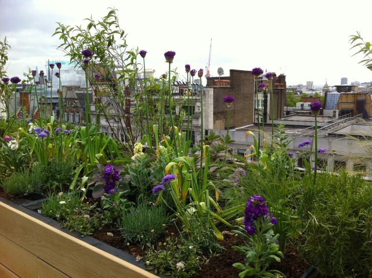 John Lewis Oxford Street roof garden, May 2014
