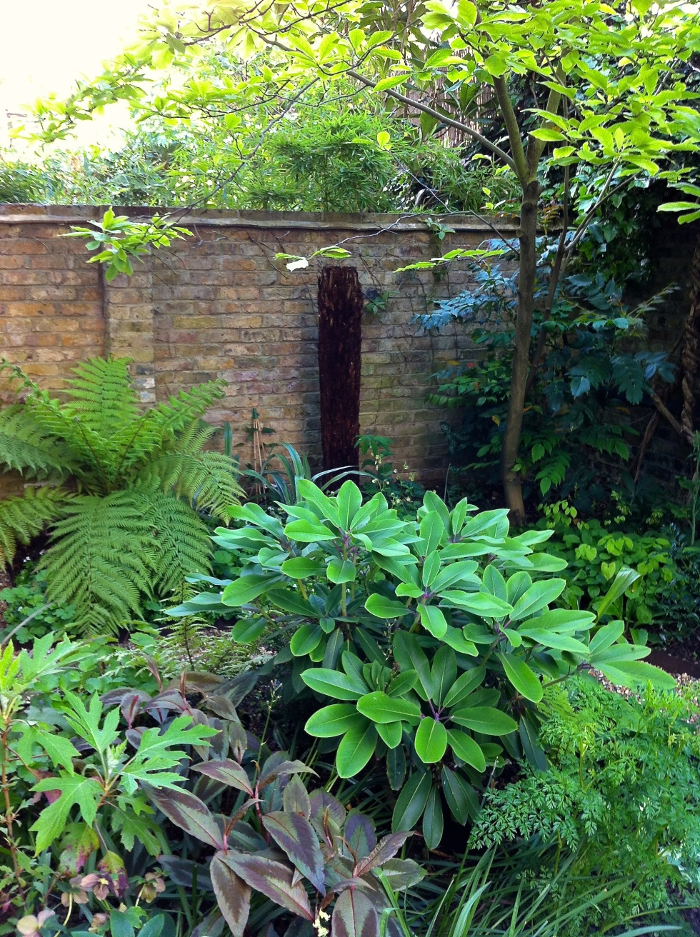 David and Goliath, tree ferns, London, May 2014