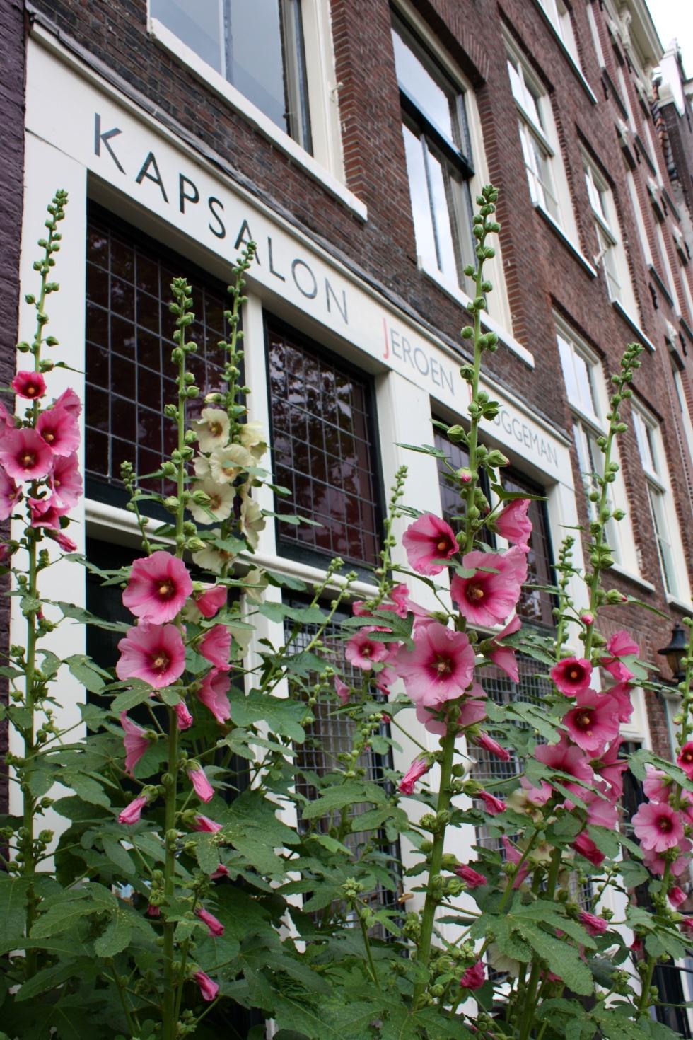 Hollyhocks, Amsterdam, June 2014