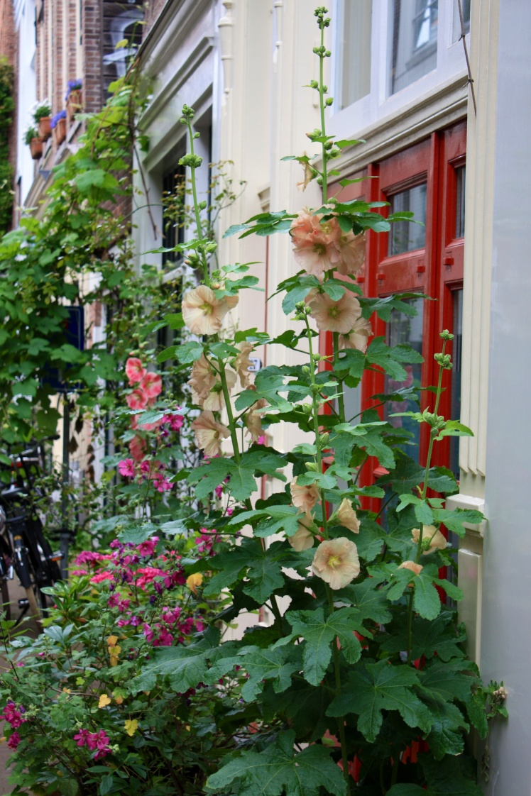 Hollyhocks, Amsterdam, June 2014