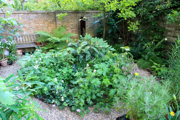 Our London Garden, island bed,  June 2014