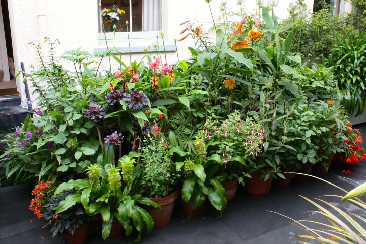 Going ape. Pots outside the front door