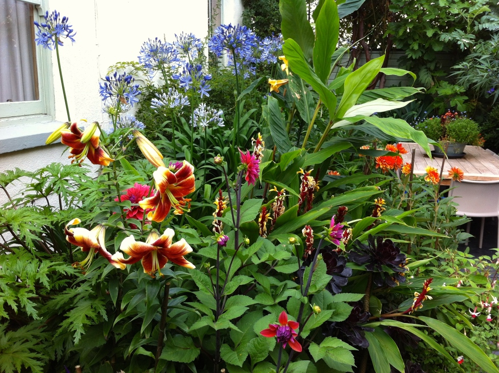 A riot of colour including Dahlia 'Amercian Dawn', Agapanthus africanus, Cautleya spicata and Lilium 'Debby'