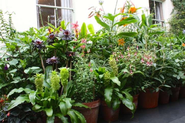 Mixed pots, The Watch House, July 2014
