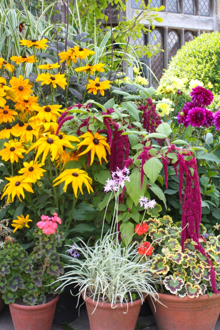 Coloourful rudbekia, amaranthus, dahlias, geraniums and Tulbaghia violacea 'Silver Lace' grace Great Dixter's Porch