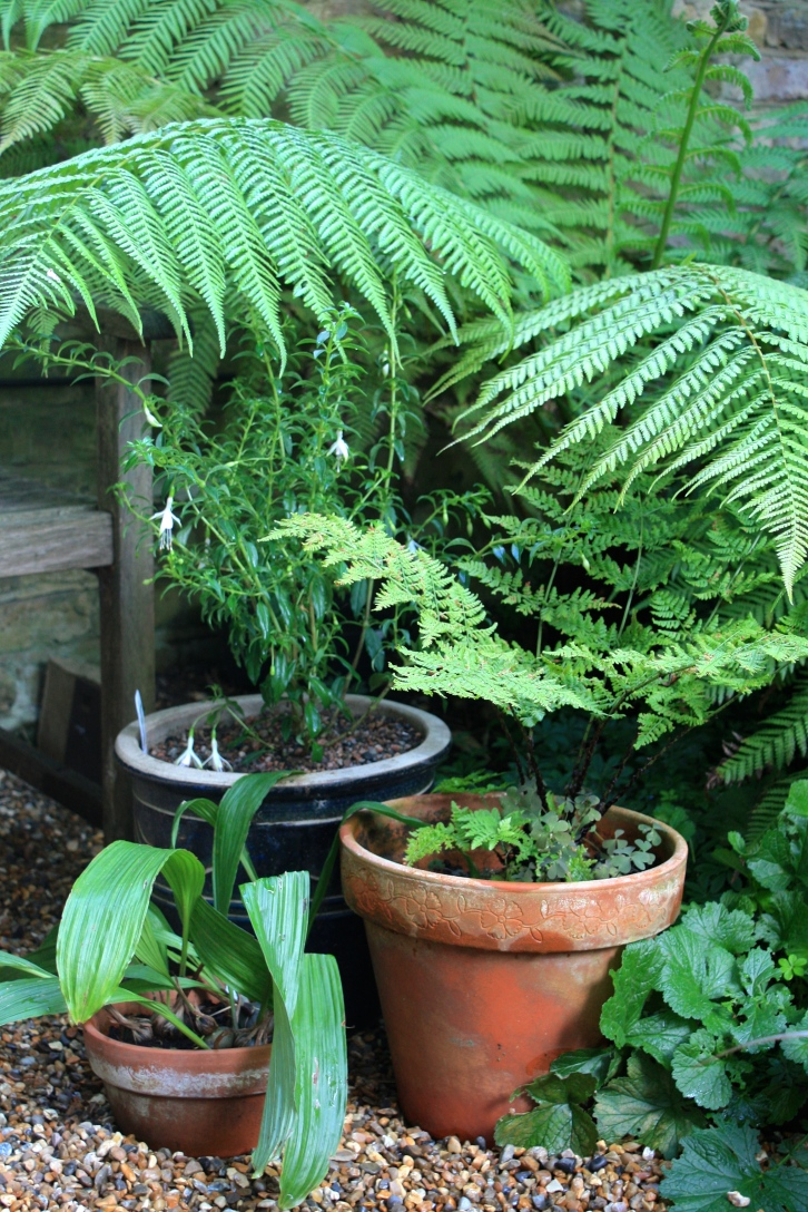 Any pots that can be moved will benefit from relocation to a shaded part of the garden