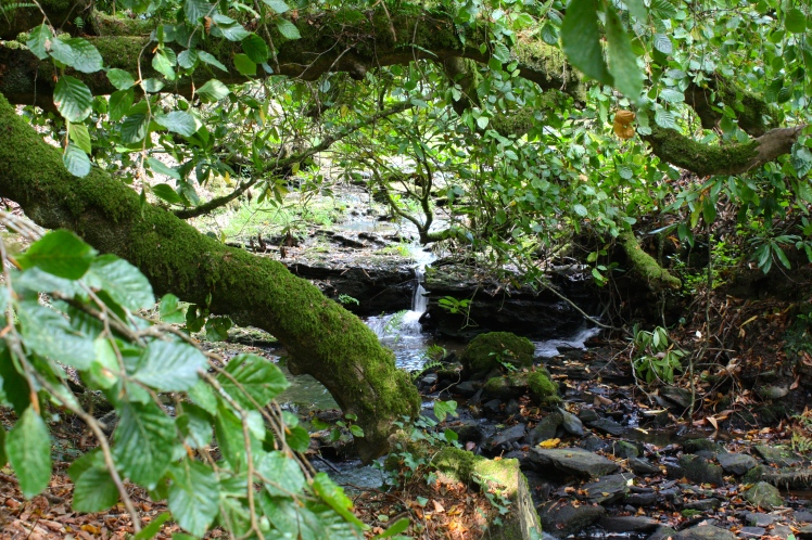 The dell's central stream flows beneath the boughs of Endsleigh guests' favourite tree, a weeping beech