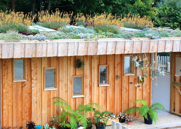 Not just a green roof, but a pretty one, topping off the plant sales area at Tremenheere Nursery