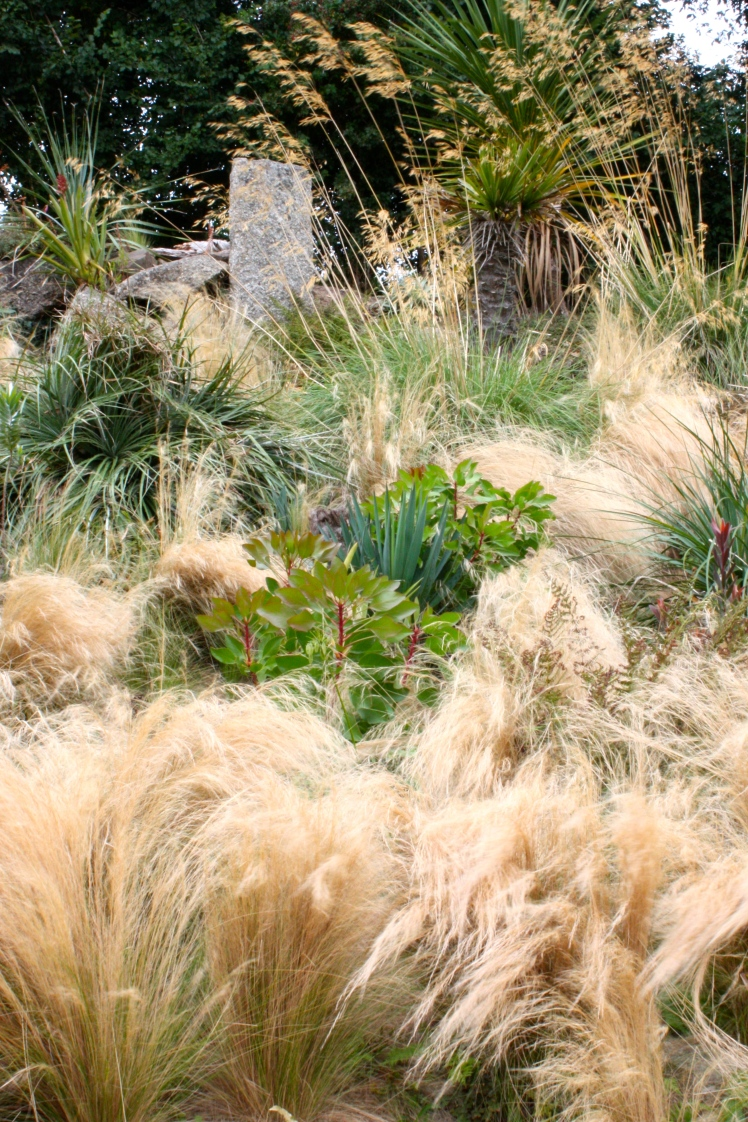 Puyas and proteas, broken free from their granite mooring, emerge from foaming waves of Stipa tenuissima and Stipa gigantea